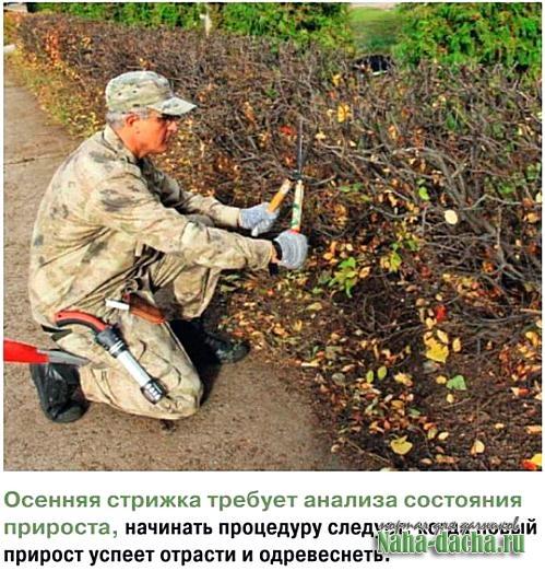 Правила обрезки деревьев и кустарников
