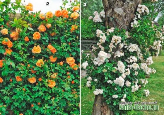 10 идей для розария