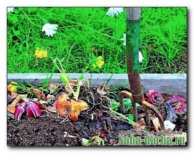 Как получить дешевое органическое удобрение на даче