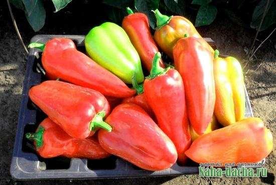 краткие рекомендации по выращиванию