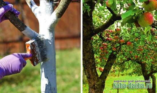 Спасаем сад от вредителей