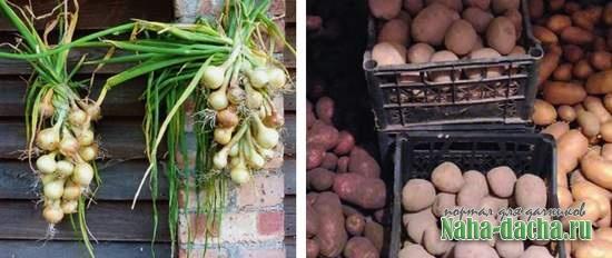 Хранение урожая: правила и практические советы