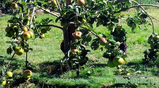 Двенадцать мифов о дачном саде