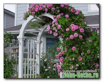 Использование решетчатых шпалер в саду