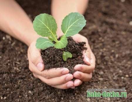 Как лучше подготовить почву для посадки рассады