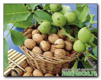 Ореховый сад: шаги к высокому урожаю