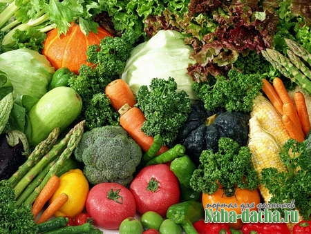 Огород - экономный и щедрый на урожай