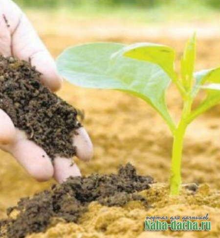 Как улучшить песчаную почву