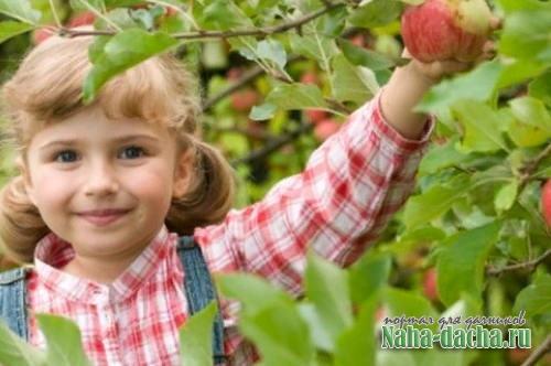 Выбор яблонь для региона. Летние сорта