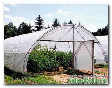 Как навести порядок в теплице и позаботиться о почве