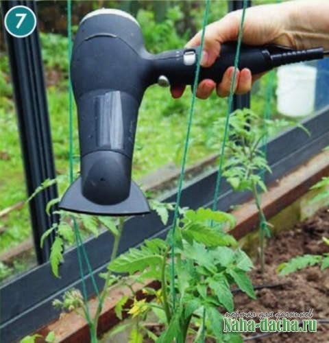 Как опылять помидоры