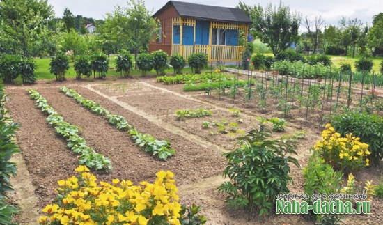 Какой должен быть оптимальный огород