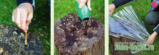 Как выкорчевать пень в саду своими руками