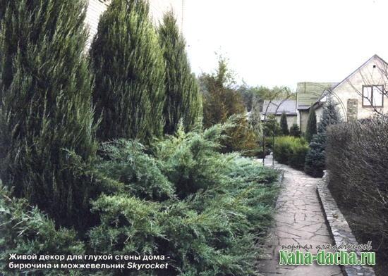 Зеленые изгороди