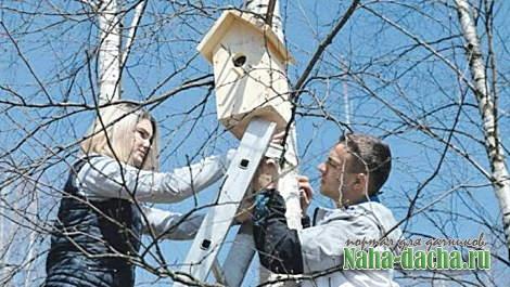 Как сделать домик для птиц своими руками