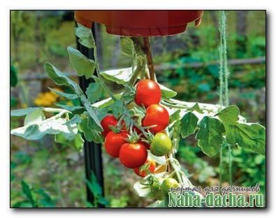 Высадка томатов в подвесной горшок