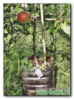 Мобильный сад