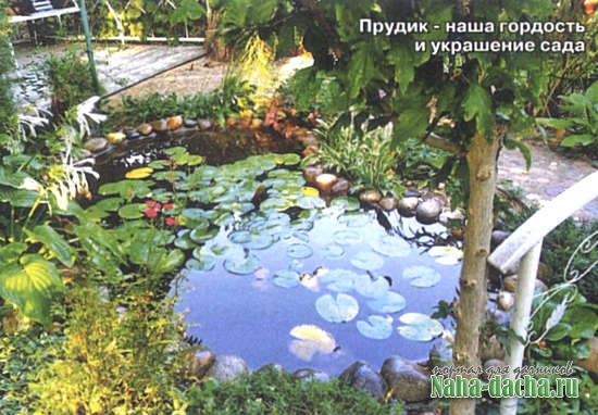 Красивый сад: бюджетный вариант